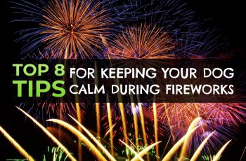 8 Ways to Calm Your Dog During Fireworks