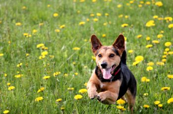 How to Improve Your Dog's Recall