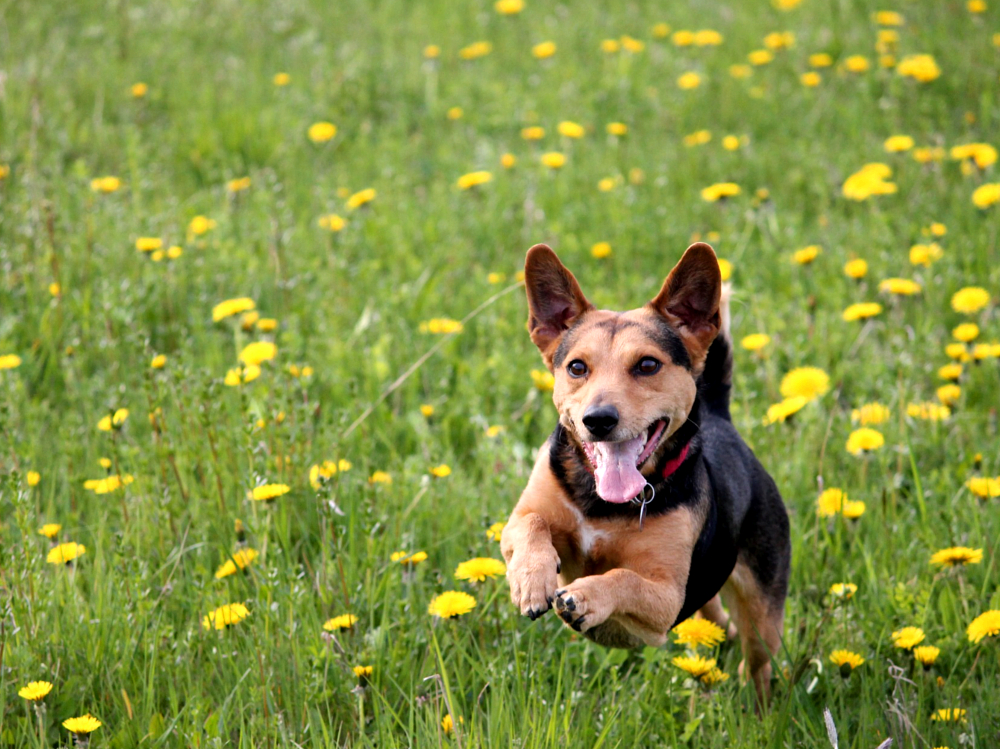 How to improve dog recall training by higherwell farm dog walking field in newquay cornwall
